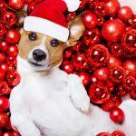unleashed-dog-santa-hats